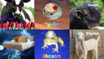 Why Everyone's Obsessing Over 'What Animal Are You' Instagram Accounts