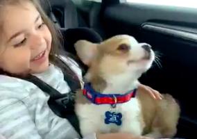 Puppy Enjoys Frank Ocean, Sings Along To 'Self Control'