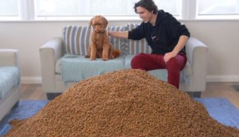 Guy Surprises His Dog With One Million Dog Biscuits