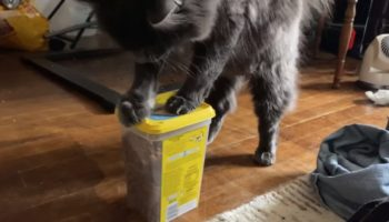 This Cat Found A Way To Break Into A Box Of Temptations In Under 60 Seconds