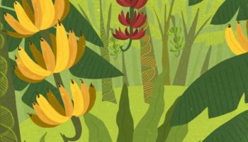 The Banana As We Know It Is Going Extinct. Could Gene Editing Save It?