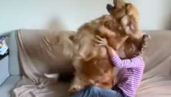 Dog Does Adorable Trust Fall With Girl