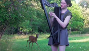 Woman's Harp-Playing In Woods Turns Into A Disney Movie When A Deer Walks In