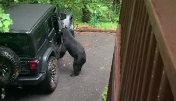 Guy Uses His Dad Voice To Scare Off Bear That's Breaking Into His Car