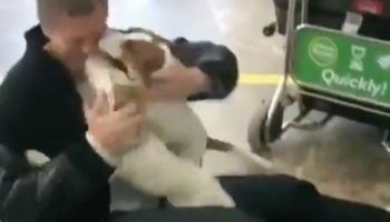 Watch These Dogs Have The Most Ecstatic Reaction When Their Owner Reunites With Them At The Airport