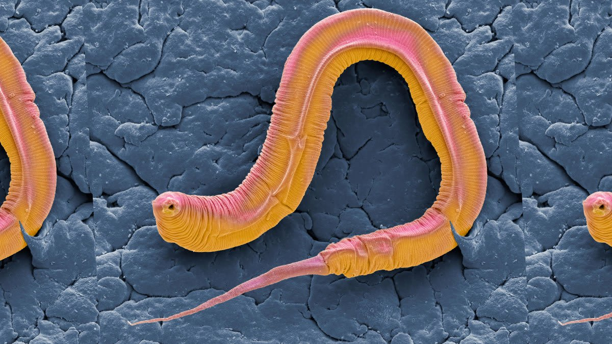 Worm Joke Causes Science Twitter Flame War Over Accusations of Sexism and Racism