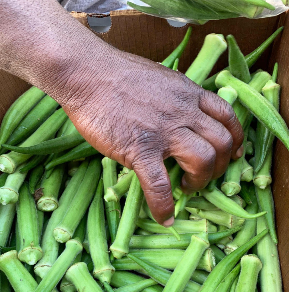 Replanting Roots In A Southern Food Desert
