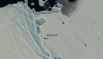 Satellite Images Reveal New Penguin Colonies In Melting Antarctica