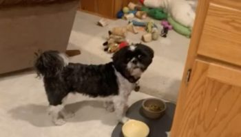 Guy Has A Trick That Always Fools His Dog Into Eating His Food