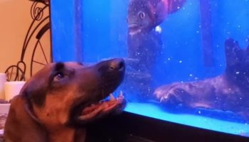 This Dog Playing With A Fish Through The Glass Is The Sweetest Thing You'll See Today