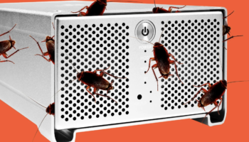 Why Are There Roaches Inside My Computer?