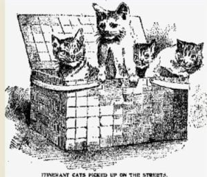 Felines Of Caroline Ewen, The Wealthy Cat Lady Of East Harlem