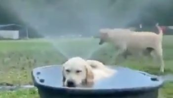 This Video Proves There's Two Types Of Dogs In This World