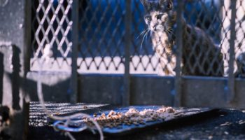 Can Feral Cats Solve New York City's Rat Problem?