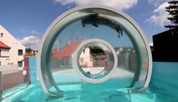 Someone Built A Circular Swimming Fixture For A Seal And It's Oddly Satisfying To Watch