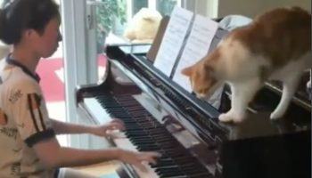Extremely Talented Cat Improvises Grand Finale For Girl's Piano Practice
