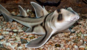 Rock-A-Bye Shark-y