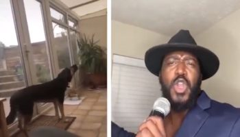 Man Took A Loop Of His Dog Howling And Made It Into A Sexy Slow Jam
