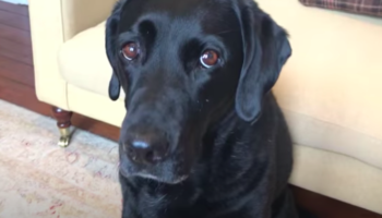 Scottish Sportscaster Chastises His Dogs For Lying On Their Dating Profiles