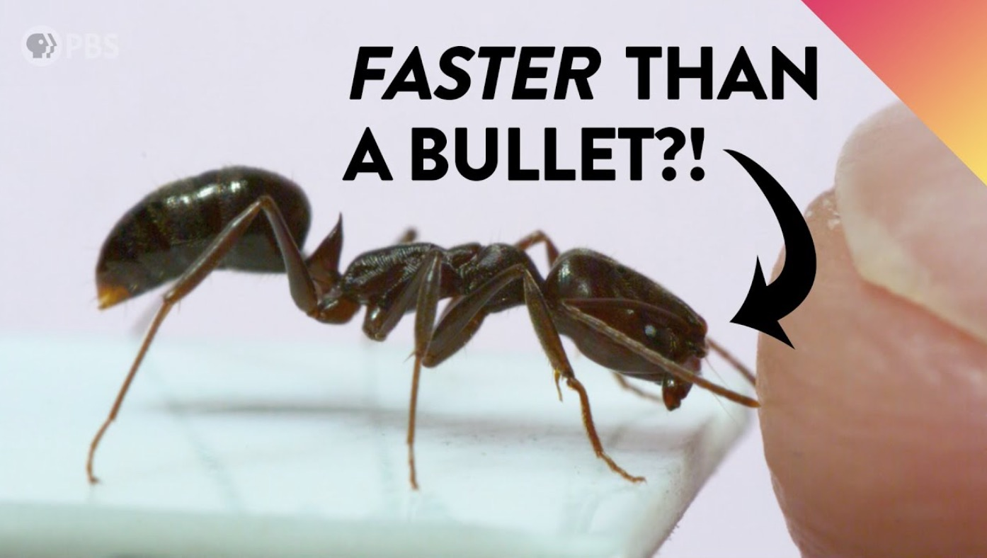 Here's How These Insects Warp The Laws Of Physics To Become The Fastest Animals In Nature
