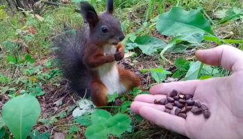 This Poor Squirrel Is Broken