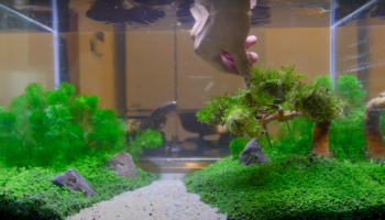 Watch A Guy Create A Flourishing Aquaponic Aquarium From Scratch