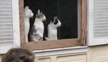 These Kittens Watching In Sync To A Ball Being Thrown Around Is The Most Adorable Thing You'll See Today