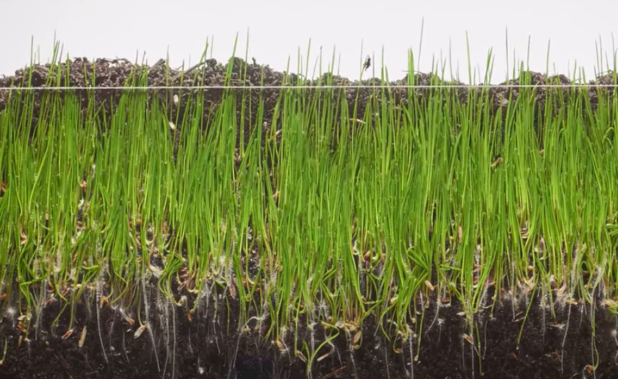 Someone Made A Time-Lapse Video Of Grass Growing Out Of 1,980 Photos