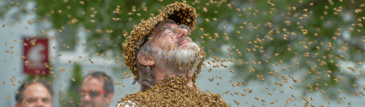 The Fungal Evangelist Who Would Save The Bees