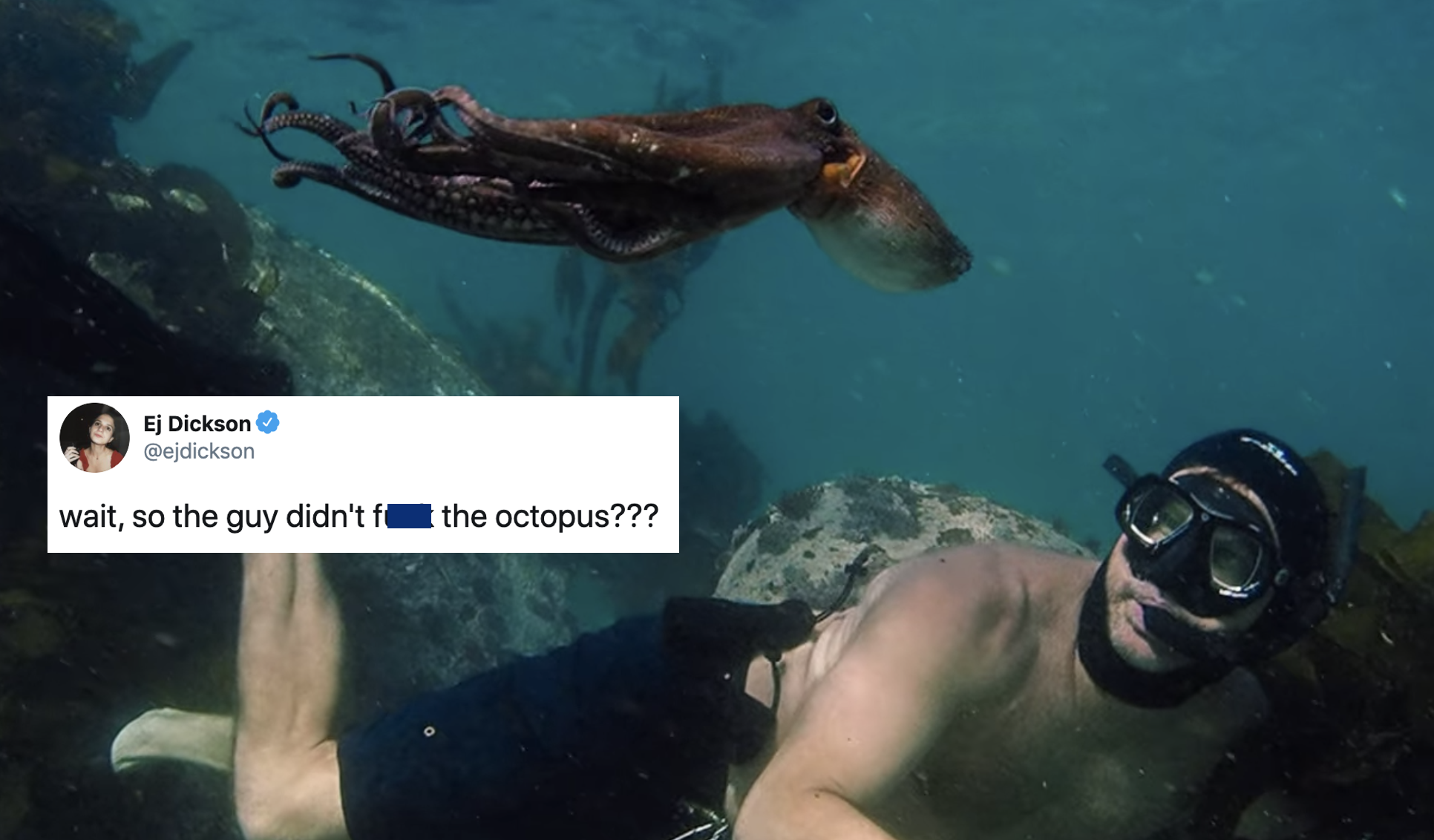 No, The Guy Does Not F*** The Octopus: What You Need To Know About The Netflix Documentary 'My Octopus Teacher'