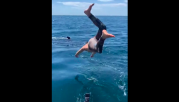 Dude Jumps Into Water With Shark In It, Dude Instantly Regrets It