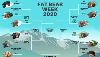 Fat Bear Week Is The Only Sport I Care About Now