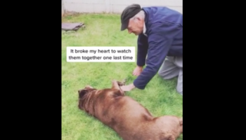 This Video Of A 90-Year-Old Neighbor Visiting His Dog Friend Before It Dies Is Getting Us Emotional