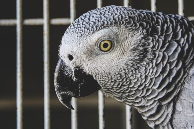 Parrots Removed From UK Family Safari Park After Teaching Each Other To Swear — And Laughing About It