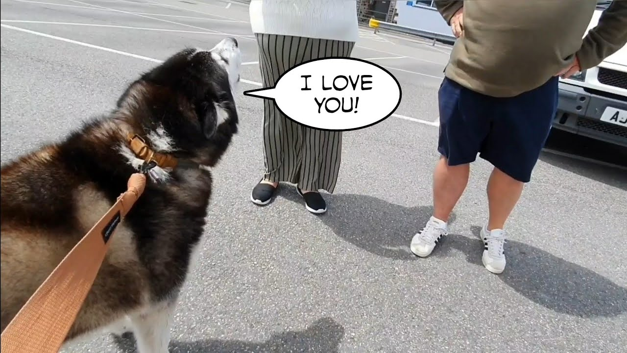Guy Takes Dog Out For A Walk, Is Embarrassed By How Talkative It Is