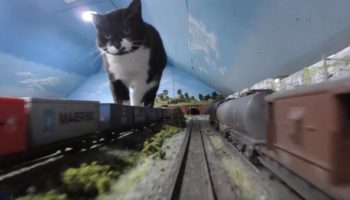 Someone Strapped A GoPro To A Model Train And Allowed Their Cat To Wander Around In Pure Awe