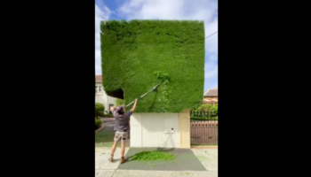 Watch How Perfectly These Hedges Are Trimmed