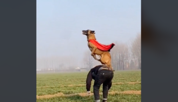 Watch This Dog Jump To Superhuman Heights For Its Treat