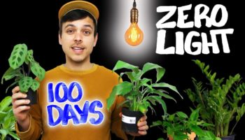 Guy Tests Out What Really Happens If You Give Plants Zero Light, Gets Unexpected Results