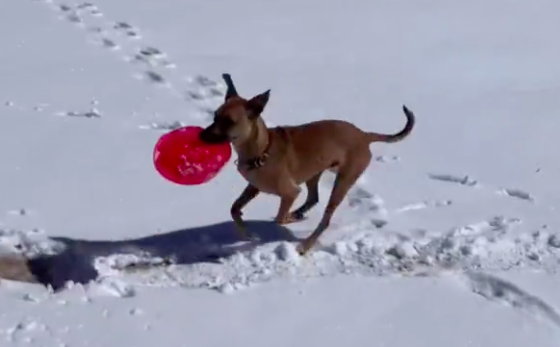 Dog Sees People Sledding Down Hill, Has Brilliant Idea To Do It As Well - Digg