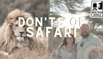 Here Are All The Things You Should Absolutely Not Do When You're On A Safari
