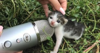 Please Enjoy The Dulcet ASMR Sounds Of A Cat For One Minute Straight